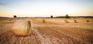 crop insurance ranchers insurance