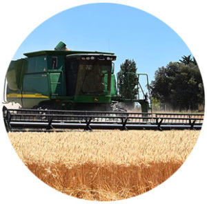 revenue protection with harvest price exclusion