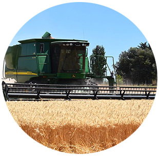 revenue protection with harvest price exclusion service