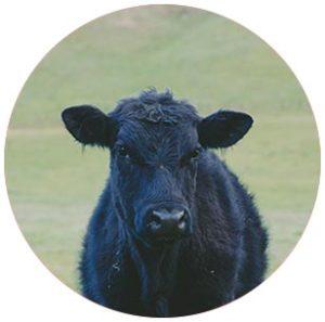 livestock insurance service