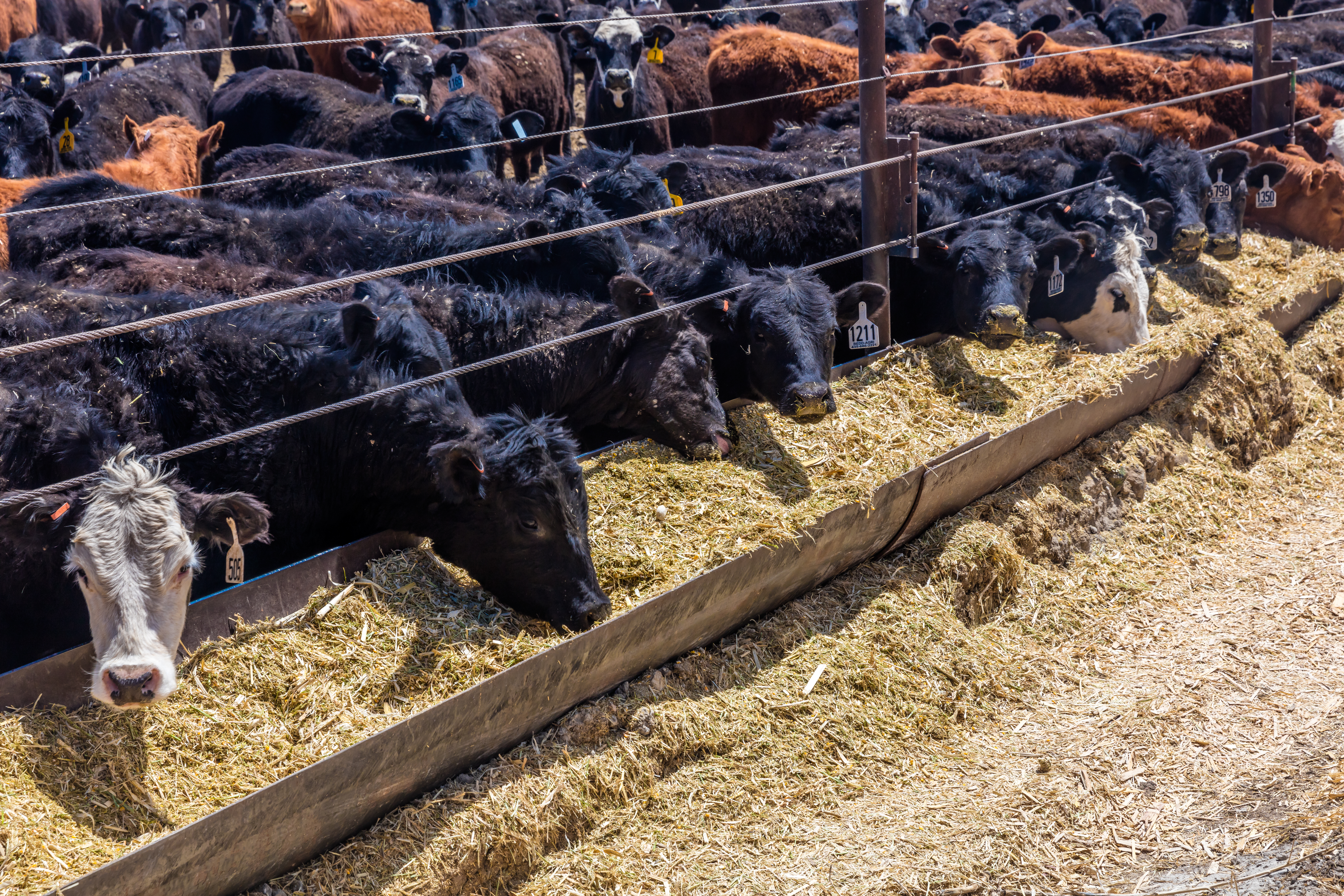 insurance for ranchers
