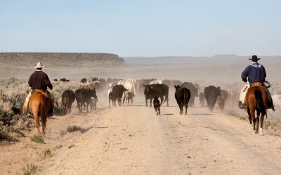 Is Now a Good Time to Enroll in Livestock Risk Protection (LRP)?